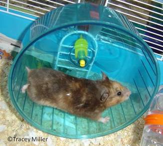 Syrian Hamster Cages